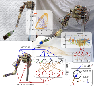 Self-exploration for tendon-driven robots